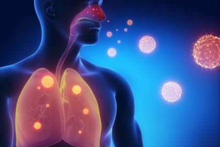 呼吸器に症状が現れます
