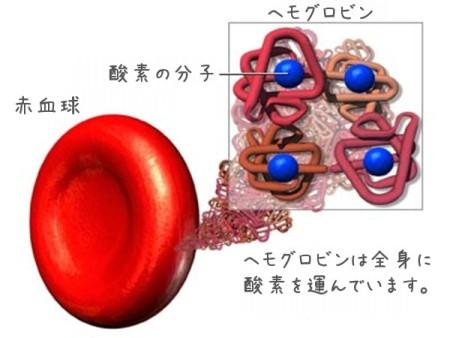 ヘモグロビンの酸素運搬機能