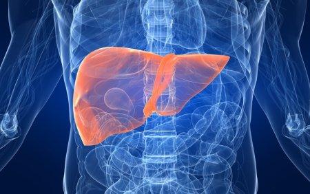 肝臓、胆道、膵臓の病気は近年増加しています